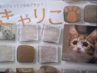猫カフェ「きゃりこ」